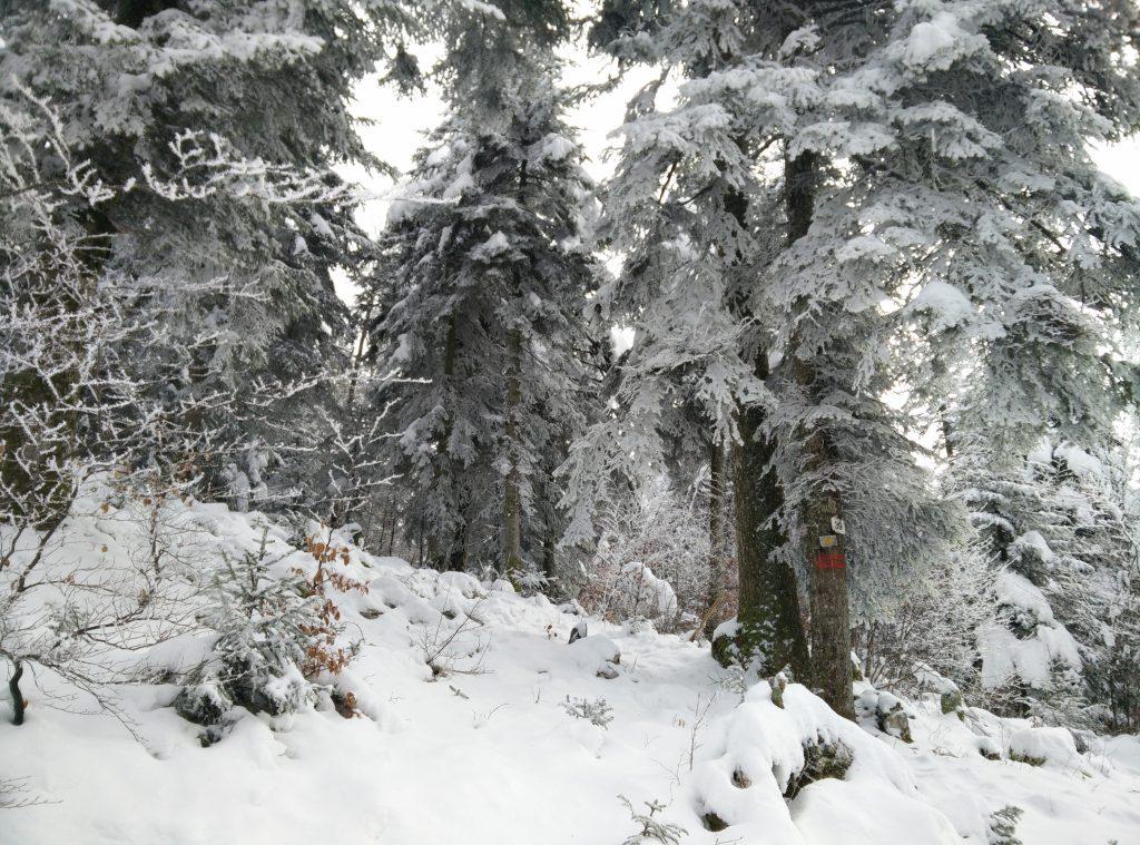 jura-montagne