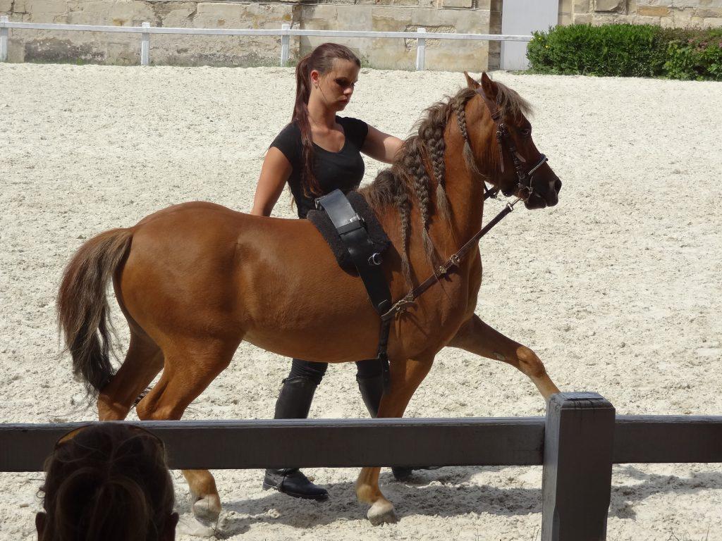poney-bai