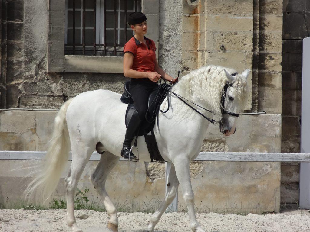 cheval-espagnol
