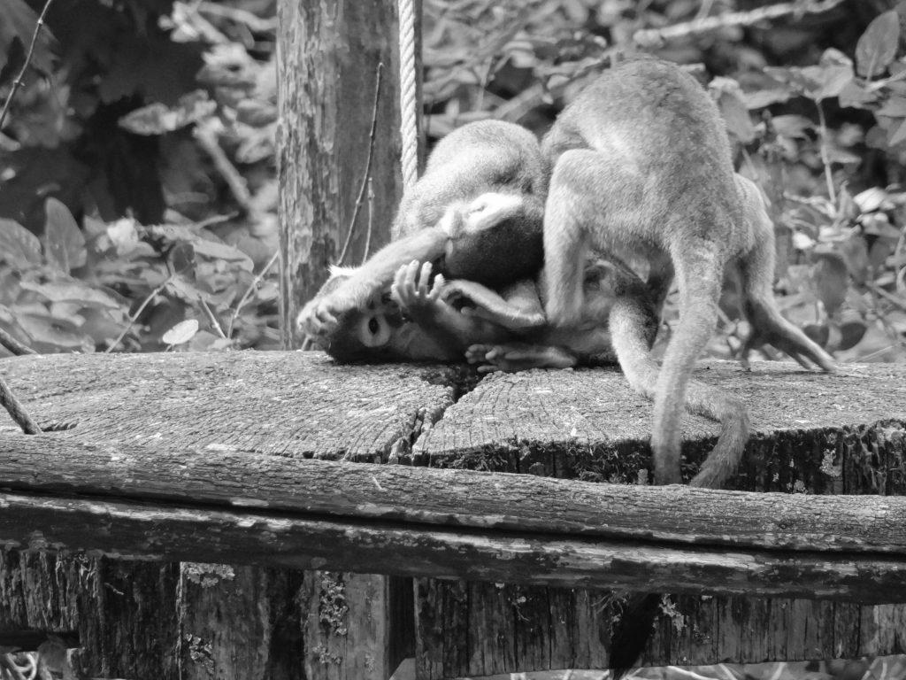 vallée-des-singes