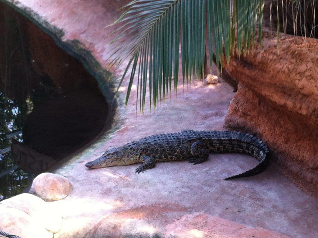 ferme-crocodile